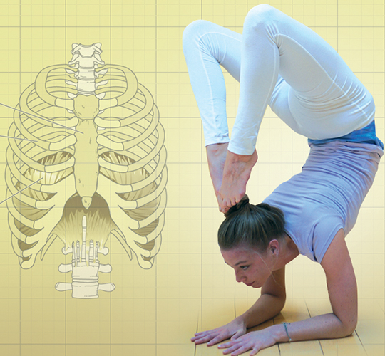 """<div style=""""line-height: 1.3; color: #CD482F; font-family: catamaran;"""">Stage """"Yoga et anatomie""""</br></div>"""